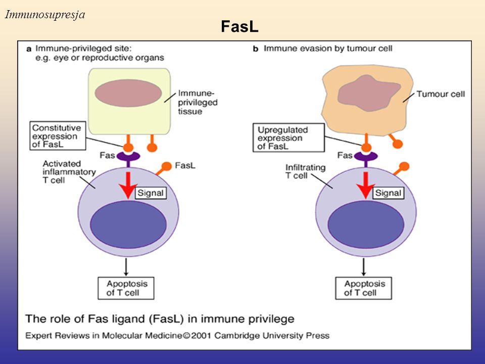 FasL Immunosupresja