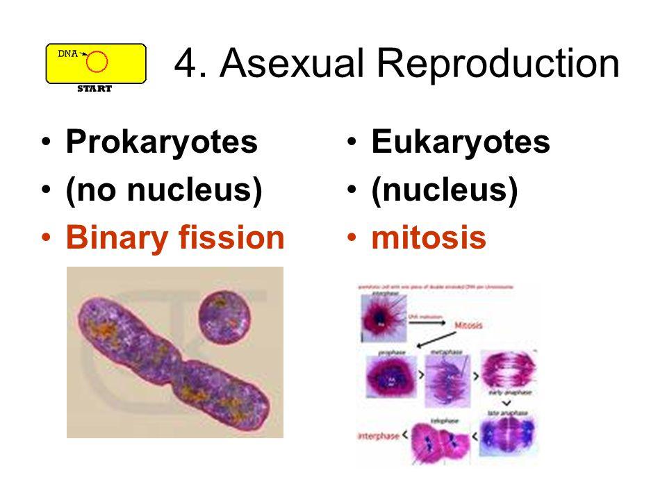 4. Asexual Reproduction Prokaryotes (no nucleus) Binary fission Eukaryotes (nucleus) mitosis