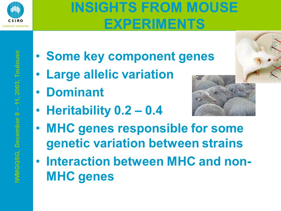 IWMGQSG, December 8 – 11, 2003, Toulouse Some key component genes Large allelic variation Dominant Heritability 0.2 – 0.4 MHC genes responsible for some genetic variation between strains Interaction between MHC and non- MHC genes INSIGHTS FROM MOUSE EXPERIMENTS