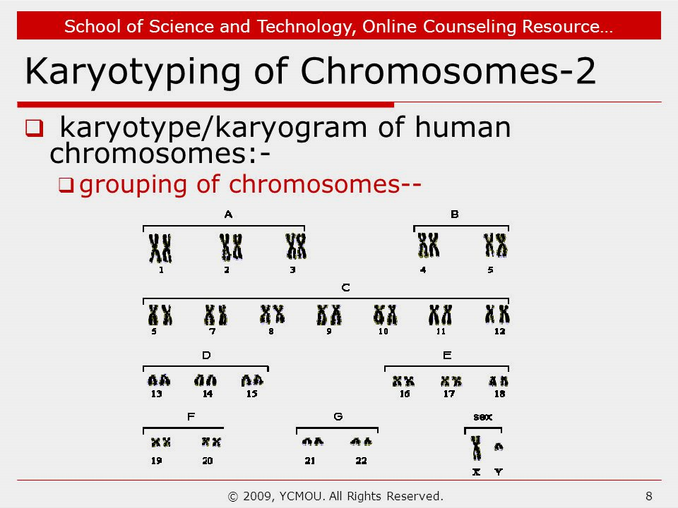 School of Science and Technology, Online Counseling Resource… Karyotyping of Chromosomes-2  karyotype/karyogram of human chromosomes:-  grouping of chromosomes-- 8© 2009, YCMOU.
