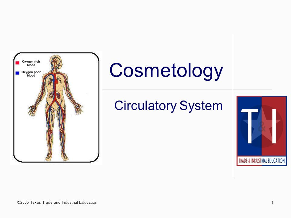 ©2005 Texas Trade and Industrial Education Cosmetology I: Circulatory System 31 Principal Veins in the Neck Blood returning to the heart from the head, face, and neck flow on each side of the neck through two principal veins: Internal jugular External jugular