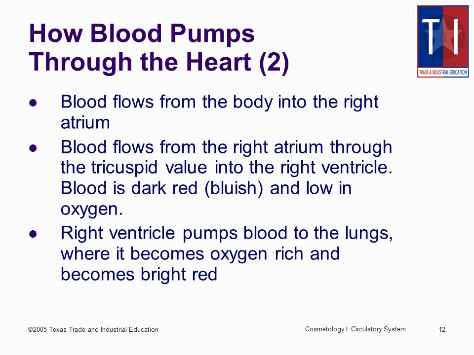 ©2005 Texas Trade and Industrial Education Cosmetology I: Circulatory System 11 How Blood Pumps Through the Heart