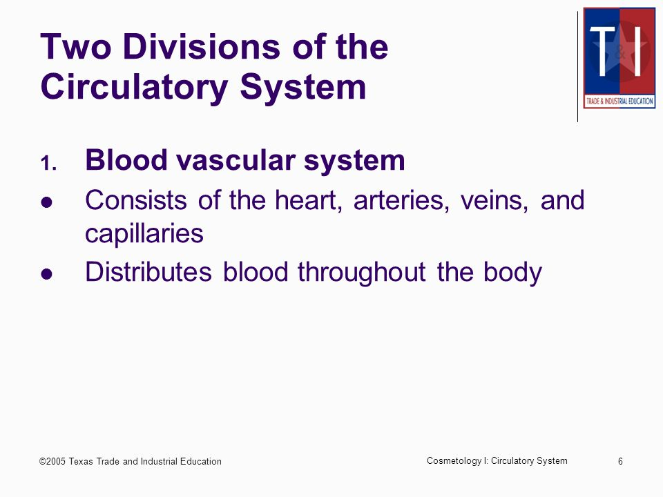 ©2005 Texas Trade and Industrial Education Cosmetology I: Circulatory System 16 Anatomy of Blood Vessels Tube-like structures that include the arteries, capillaries, and veins Arteries - thick-walled, muscular, flexible tubes Largest artery in the body is the aorta Capillaries - minute, thin-walled blood vessels Veins - Thin-walled blood vessels that are less elastic than arteries and closer to the outer skin surface of the body than arteries