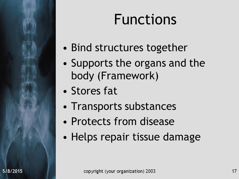 5/8/2015copyright (your organization) 200317 Functions Bind structures together Supports the organs and the body (Framework) Stores fat Transports substances Protects from disease Helps repair tissue damage