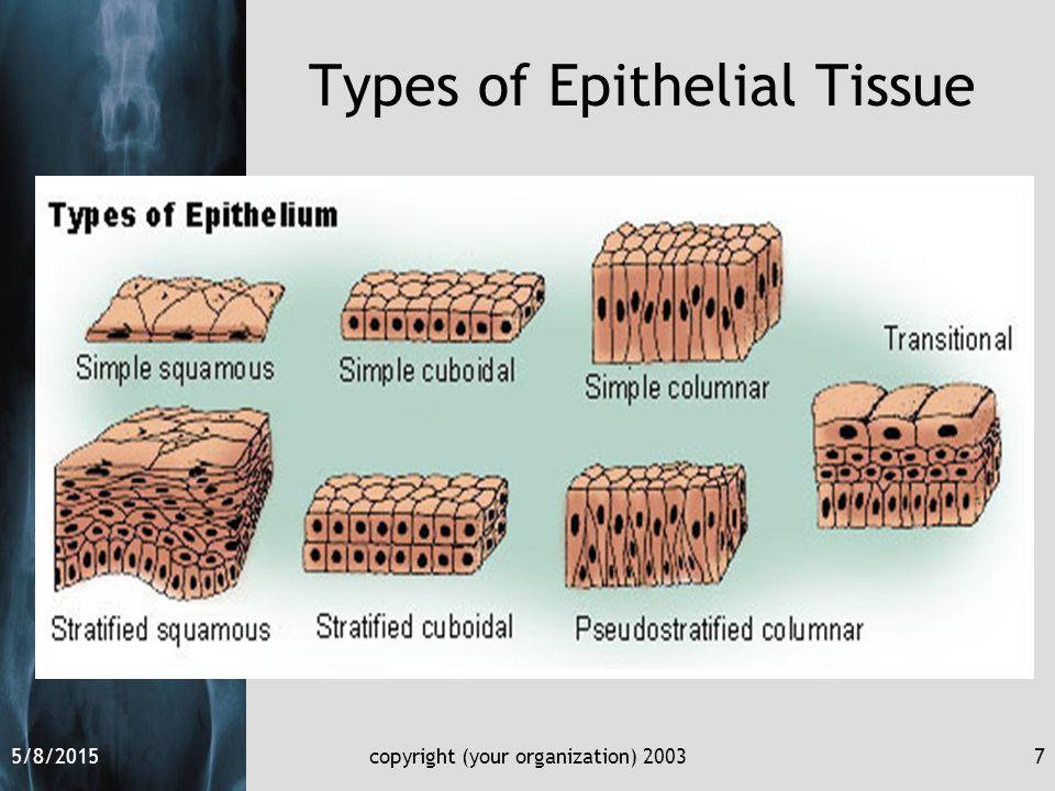 5/8/2015copyright (your organization) 20037 Types of Epithelial Tissue