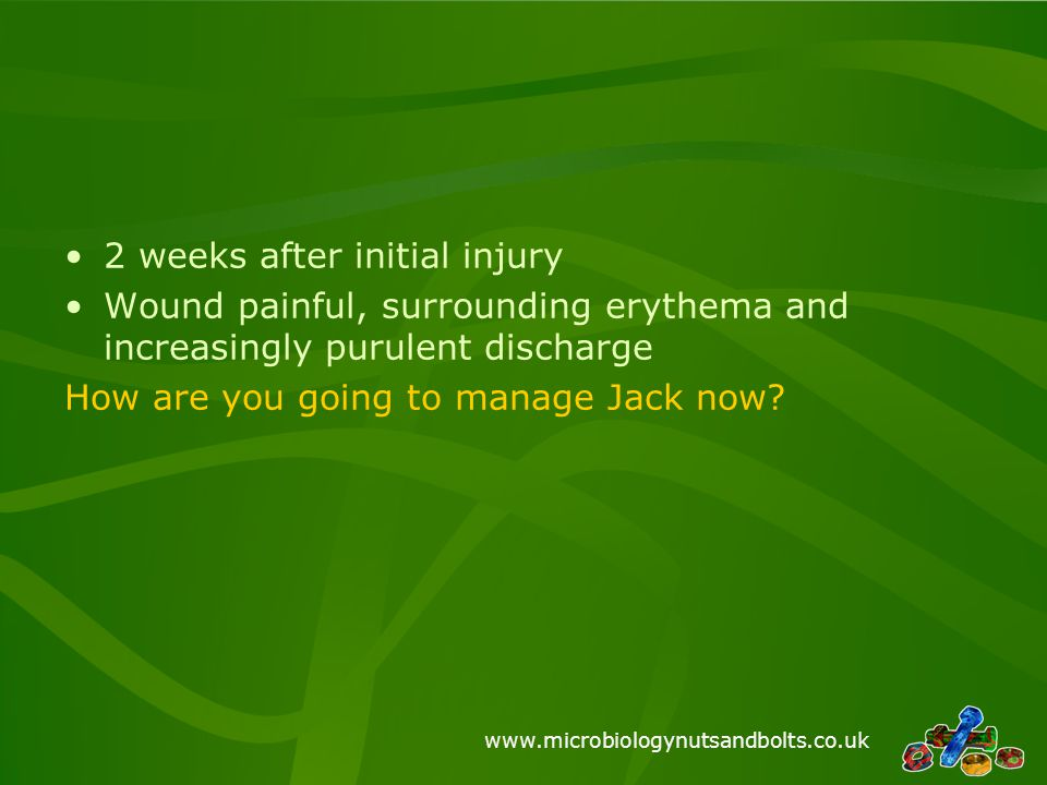 www.microbiologynutsandbolts.co.uk 2 weeks after initial injury Wound painful, surrounding erythema and increasingly purulent discharge How are you go