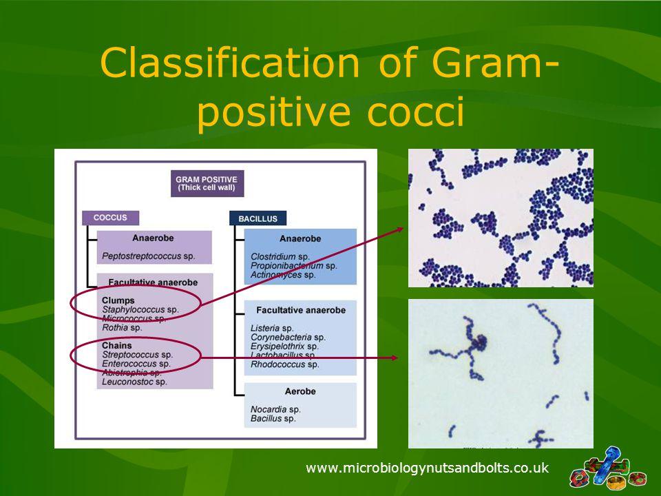 www.microbiologynutsandbolts.co.uk Classification of Gram- positive cocci
