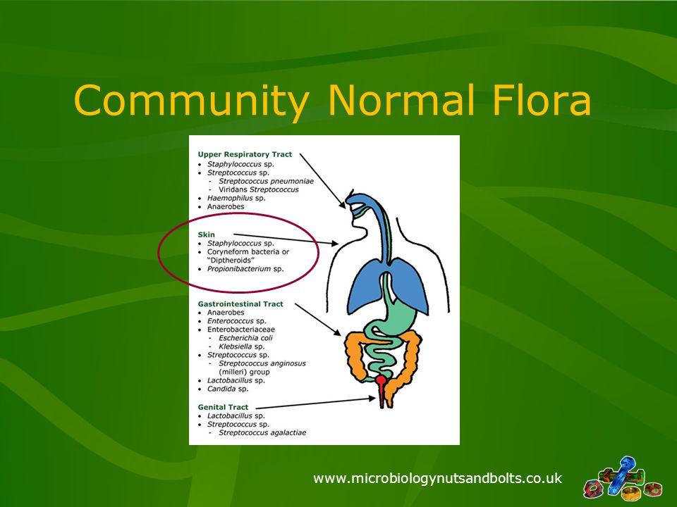 www.microbiologynutsandbolts.co.uk Community Normal Flora