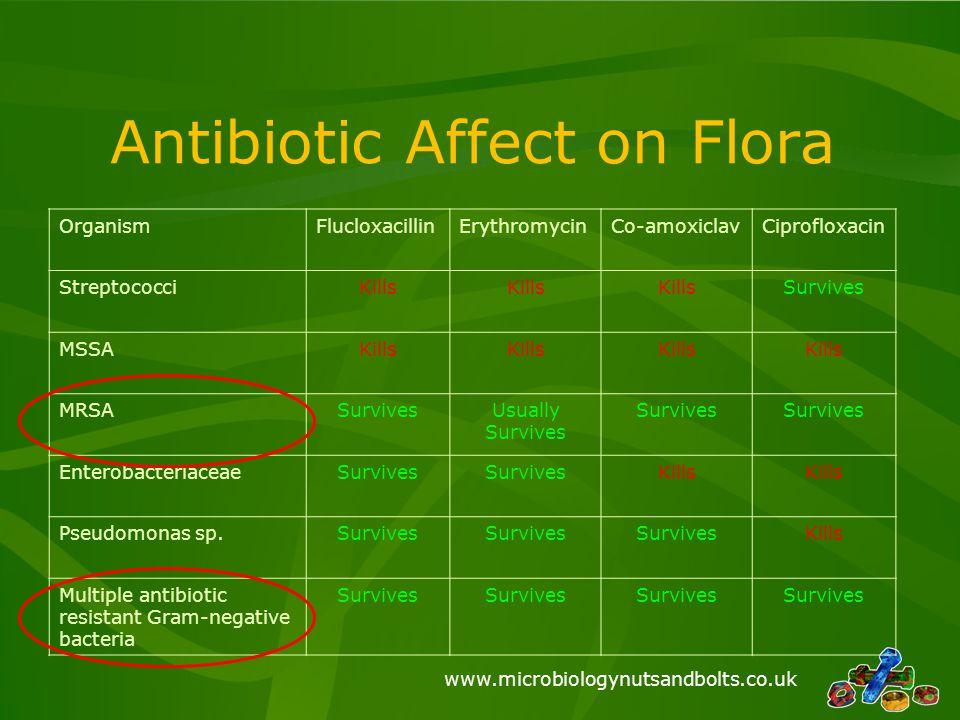 www.microbiologynutsandbolts.co.uk Antibiotic Affect on Flora OrganismFlucloxacillinErythromycinCo-amoxiclavCiprofloxacin StreptococciKills Survives M