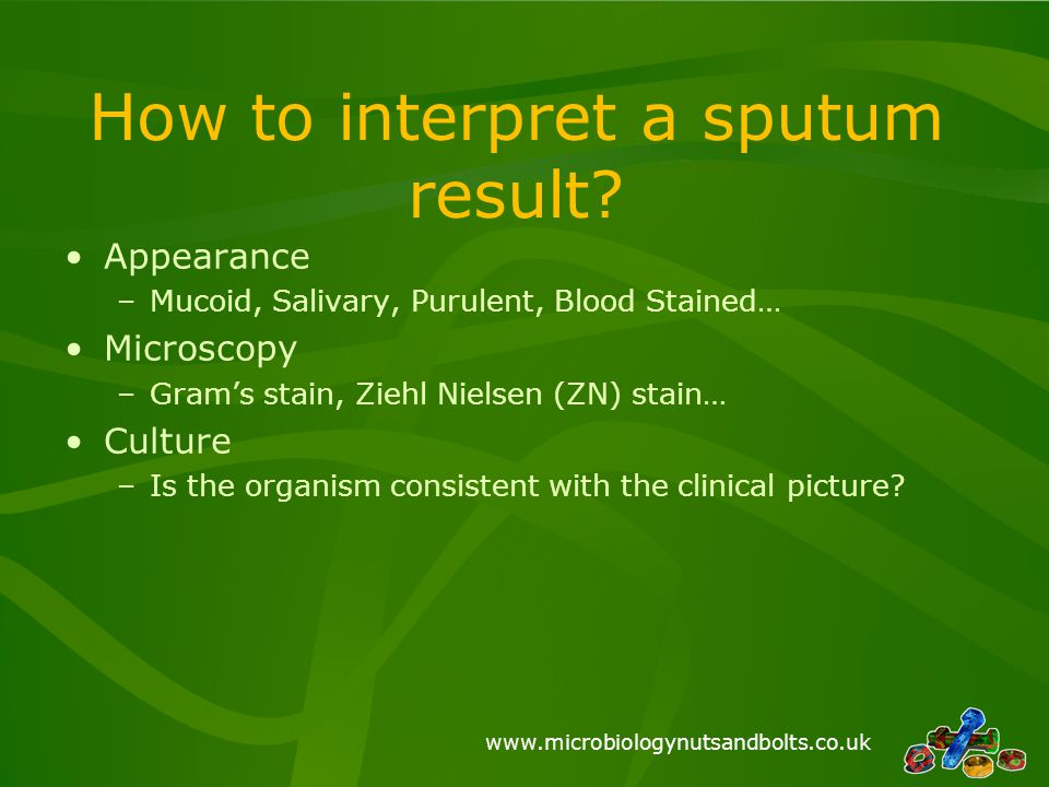 www.microbiologynutsandbolts.co.uk How to interpret a sputum result? Appearance –Mucoid, Salivary, Purulent, Blood Stained… Microscopy –Gram's stain,