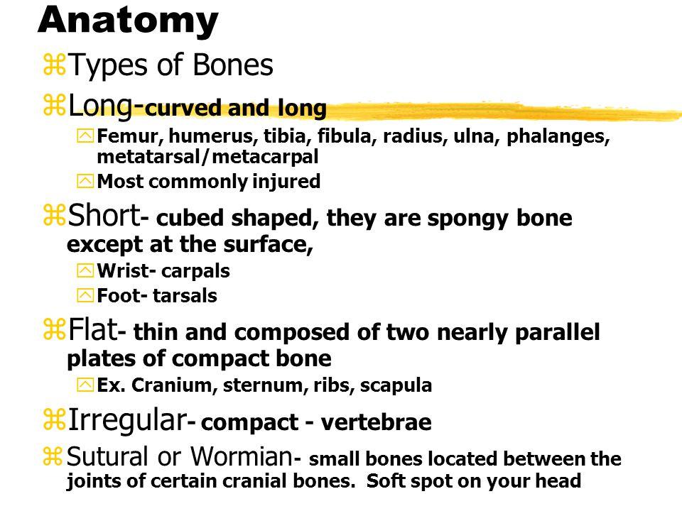 Bones continued zLower extremity zPelvis zFemur zPatella zTibia zFibula zTarsals zCalcaneous zTalus zMetatarsals zPhalanges