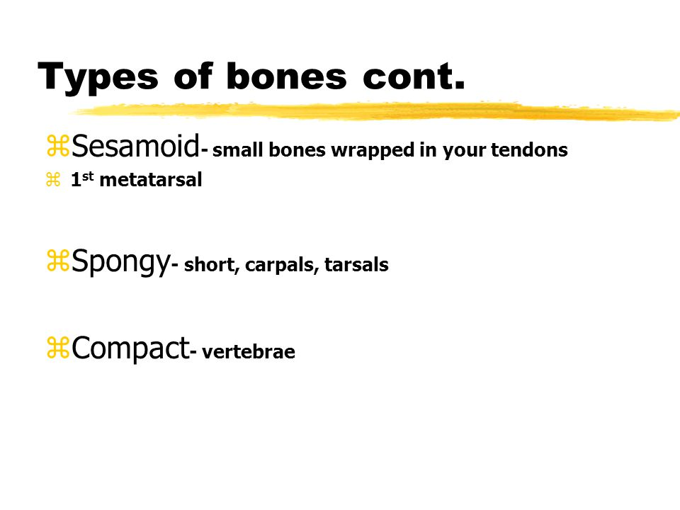 Anatomy zTypes of Bones zLong- curved and long yFemur, humerus, tibia, fibula, radius, ulna, phalanges, metatarsal/metacarpal yMost commonly injured zShort - cubed shaped, they are spongy bone except at the surface, yWrist- carpals yFoot- tarsals zFlat - thin and composed of two nearly parallel plates of compact bone yEx.