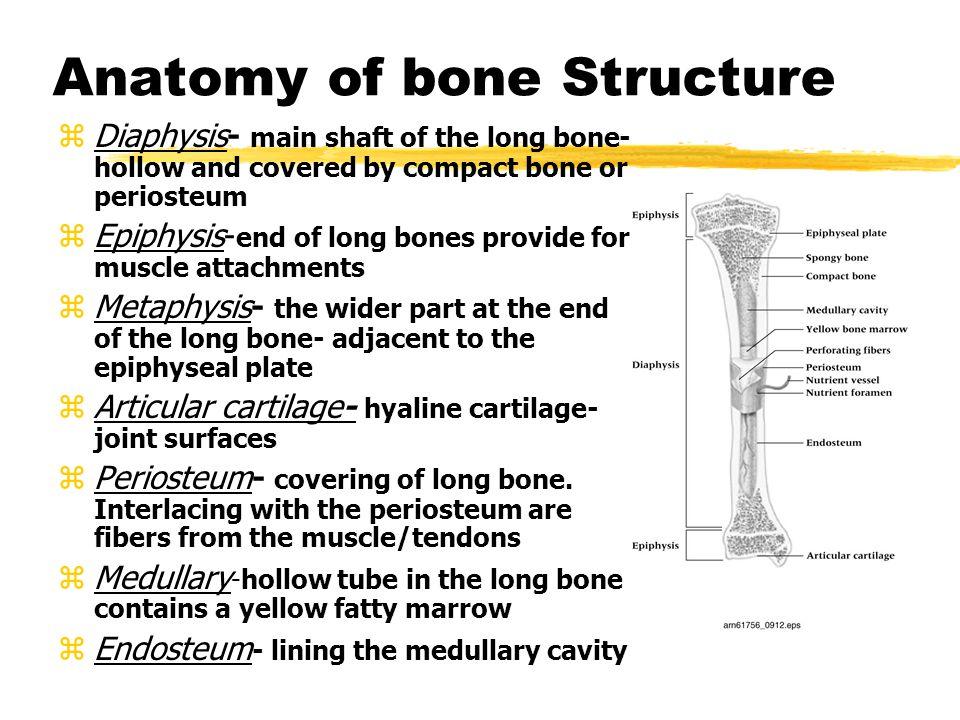 Types of bones cont.