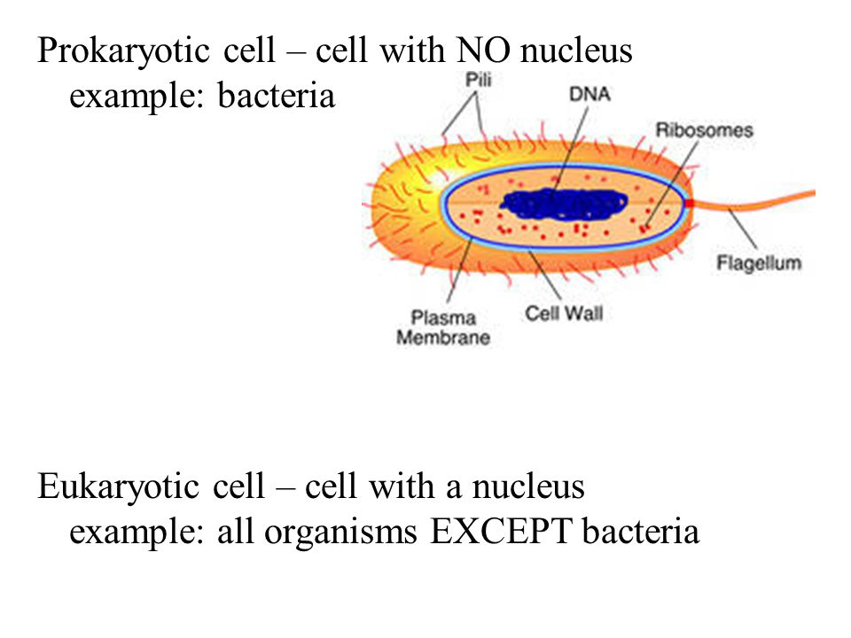 Cell division in animal cells and plant cells is similar, but plant cells do not have centrioles and animal cells do not form cell walls.
