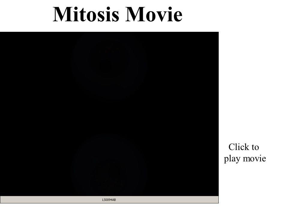 Mitosis Movie Click to play movie