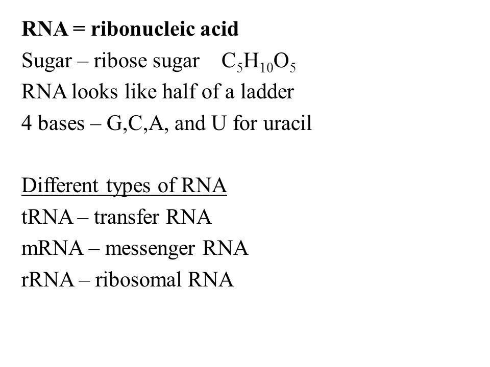 RNA = ribonucleic acid Sugar – ribose sugar C 5 H 10 O 5 RNA looks like half of a ladder 4 bases – G,C,A, and U for uracil Different types of RNA tRNA – transfer RNA mRNA – messenger RNA rRNA – ribosomal RNA