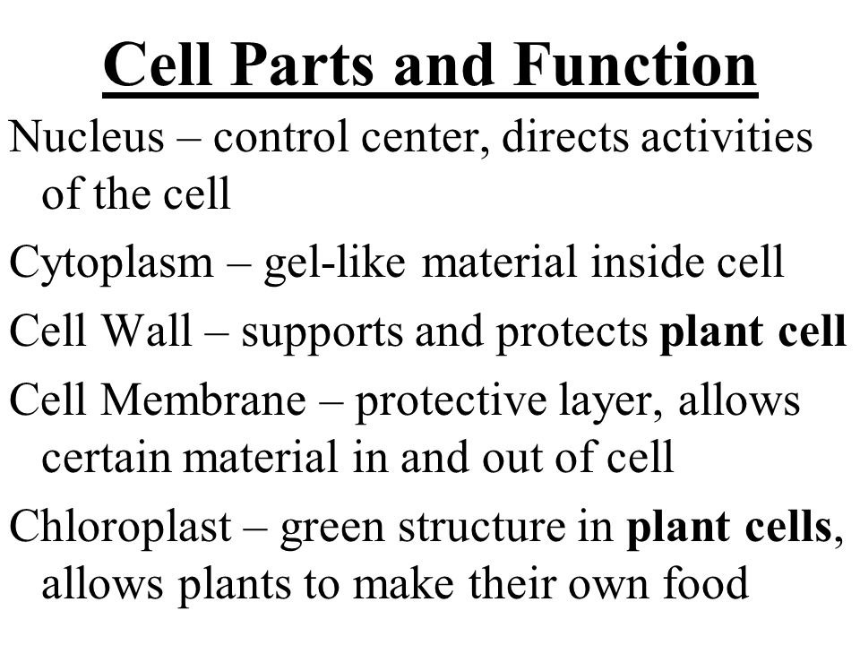 Cellular Respiration – process that breaks down food molecules into simpler substances and releases energy (split glucose using oxygen) START: glucose sugar, oxygen END: carbon dioxide, water, energy C 6 H 12 O 6 +6O 2 6CO 2 +6H 2 O + energy Happens in mitochondria