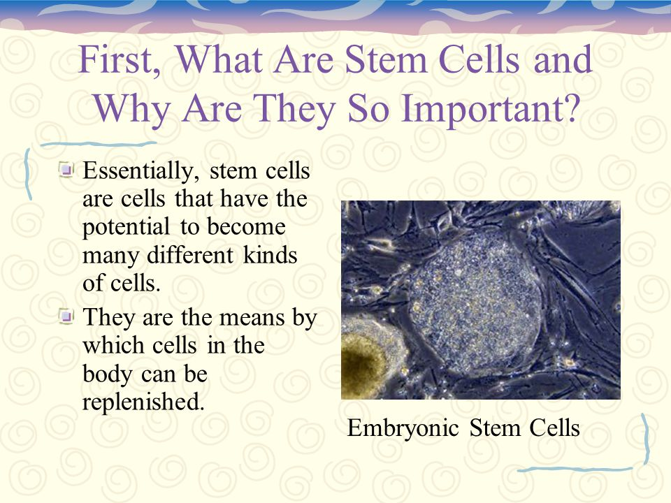 What Are Stem Cells, Anyway.