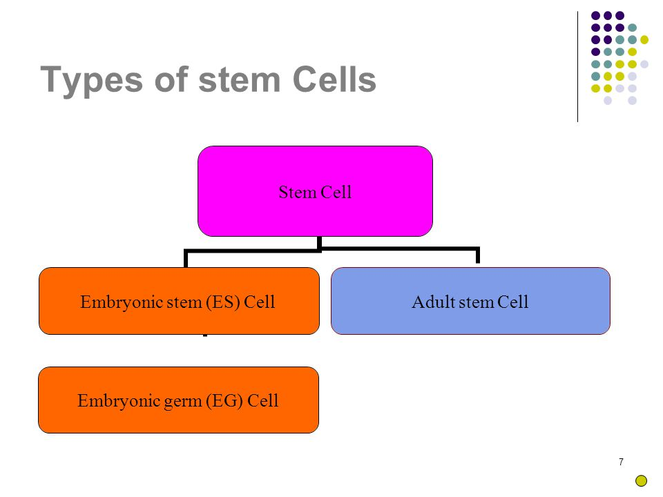 38 Sample + CD34 + PE→ Flourescence In green colour→confirms presence of stem cells
