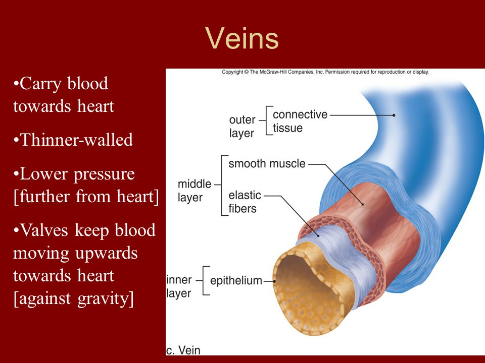 Carry blood towards heart Thinner-walled Lower pressure [further from heart] Valves keep blood moving upwards towards heart [against gravity] Veins