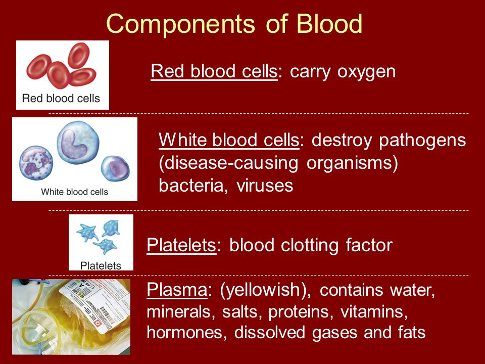 Components of Blood Plasma: (yellowish), contains water, minerals, salts, proteins, vitamins, hormones, dissolved gases and fats Red blood cells: carr