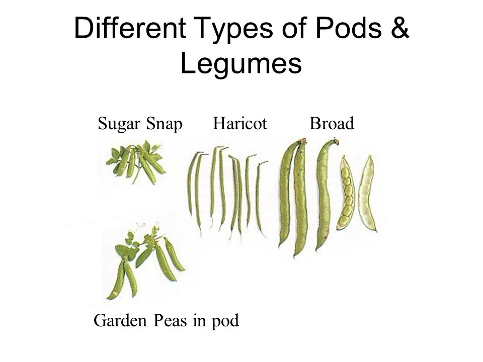 Different Types of Pods & Legumes Sugar Snap Haricot Broad Garden Peas in pod
