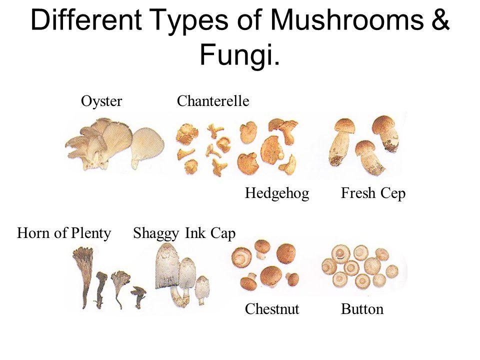 Different Types of Mushrooms & Fungi.