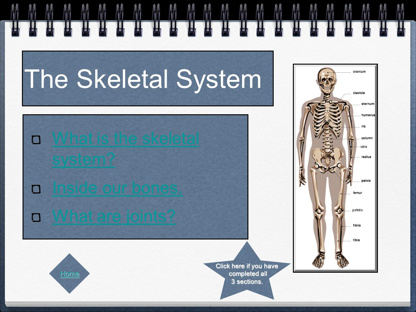 The Skeletal System What is the skeletal system. Inside our bones.