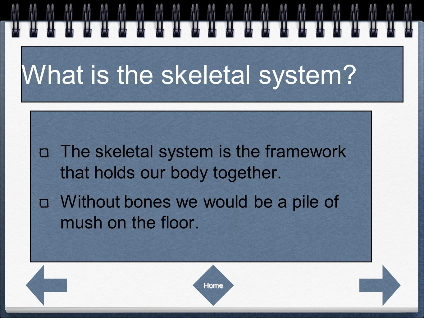 The skeletal system is the framework that holds our body together.