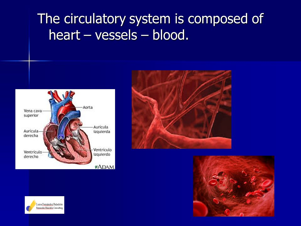 The circulatory system is composed of heart – vessels – blood.