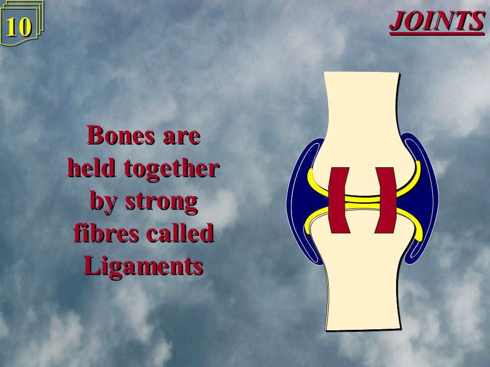 JOINTS 9 9 Surrounding the joints is a Synovial membrane, which encloses Synovial fluid to cushion the joint and reduce friction Surrounding the joints is a Synovial membrane, which encloses Synovial fluid to cushion the joint and reduce friction
