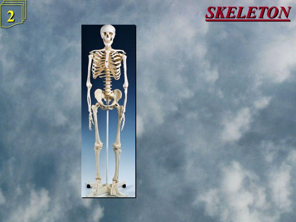 1 1 KS3 SCIENCE - BIOLOGY KS3 SCIENCE - BIOLOGY Skeleton & Muscles Skeleton & Muscles