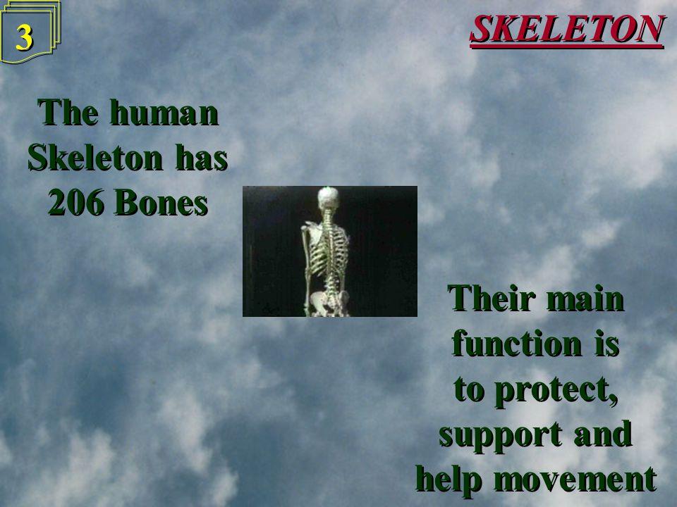 SKELETON 2 2
