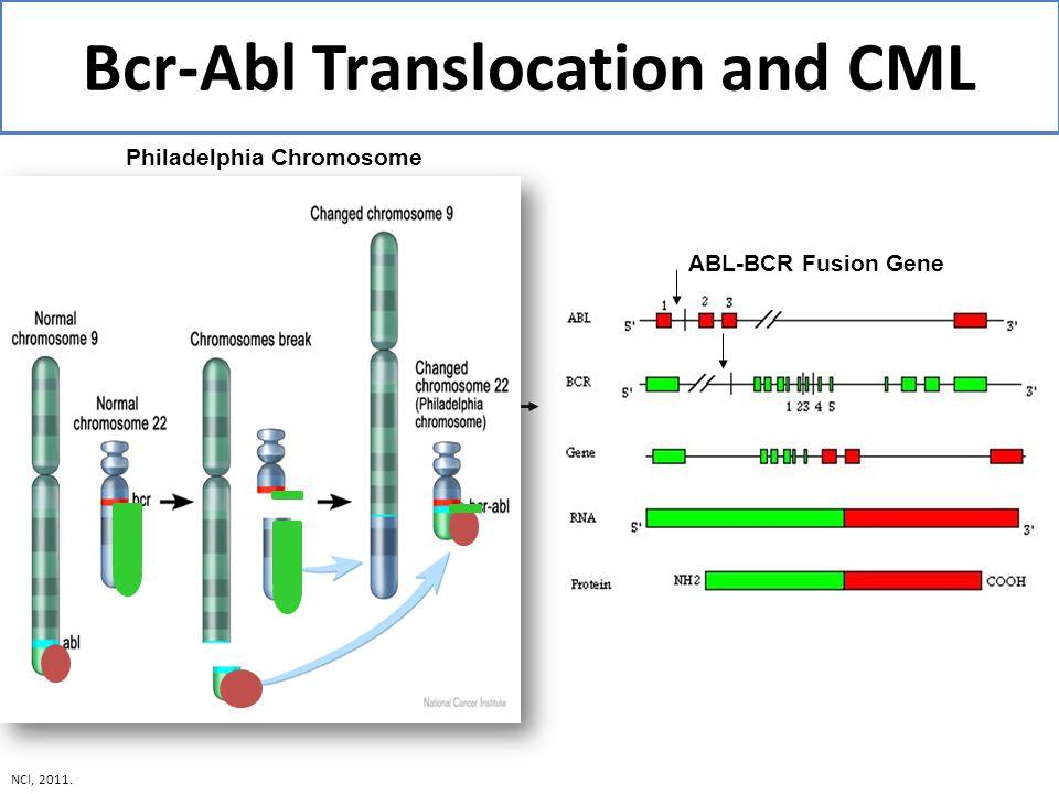 Bcr-Abl Translocation and CML ABL-BCR Fusion Gene Philadelphia Chromosome NCI, 2011.