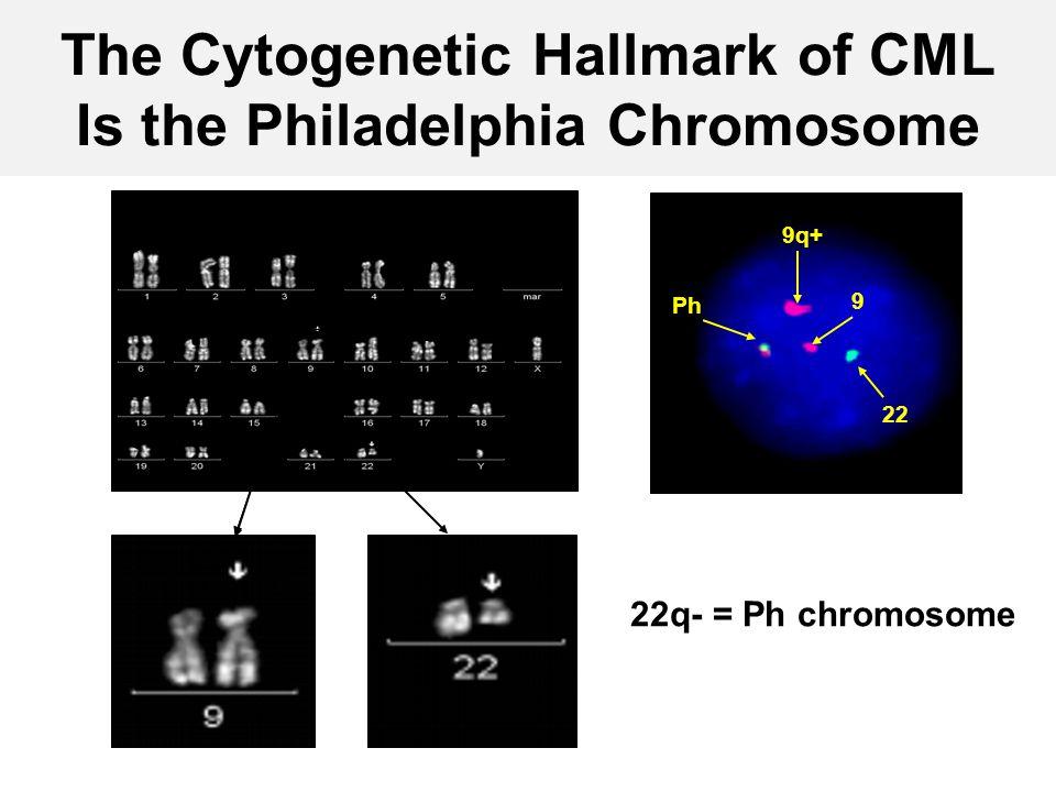9 22 Ph 9q+ The Cytogenetic Hallmark of CML Is the Philadelphia Chromosome 22q- = Ph chromosome