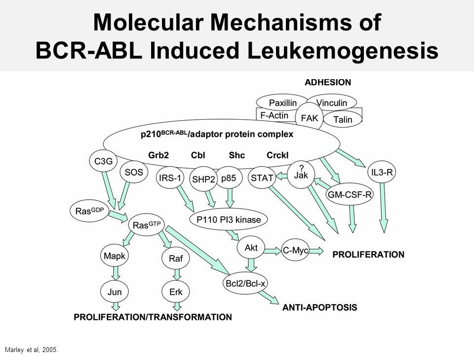 Molecular Mechanisms of BCR-ABL Induced Leukemogenesis Marley et al, 2005.