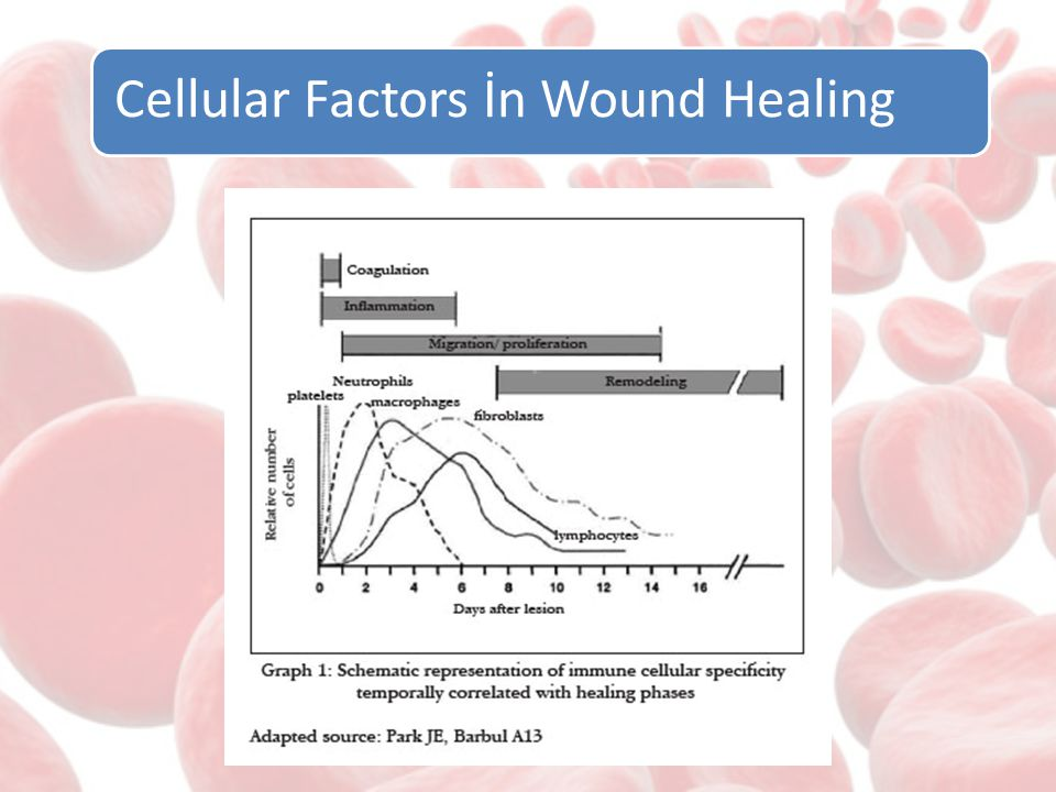 Cellular Factors İn Wound Healing