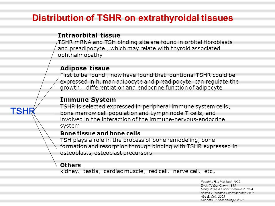 Distribution of TSHR on extrathyroidal tissues TSHR Intraorbital tissue TSHR mRNA and TSH binding site are found in orbital fibroblasts and preadipocy