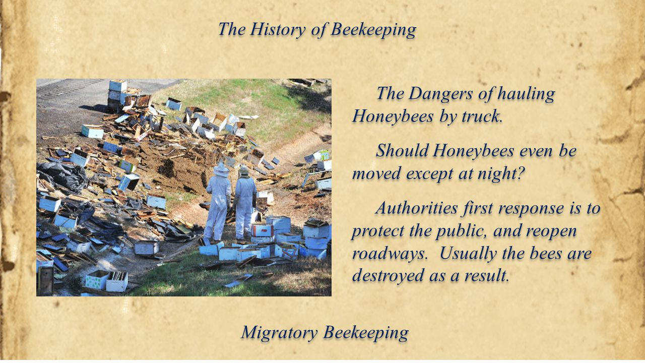 The History of Beekeeping The Dangers of hauling Honeybees by truck. Should Honeybees even be moved except at night? Authorities first response is to