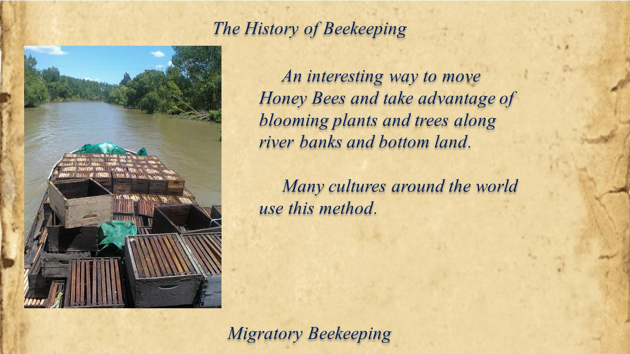 The History of Beekeeping An interesting way to move Honey Bees and take advantage of blooming plants and trees along river banks and bottom land. Man