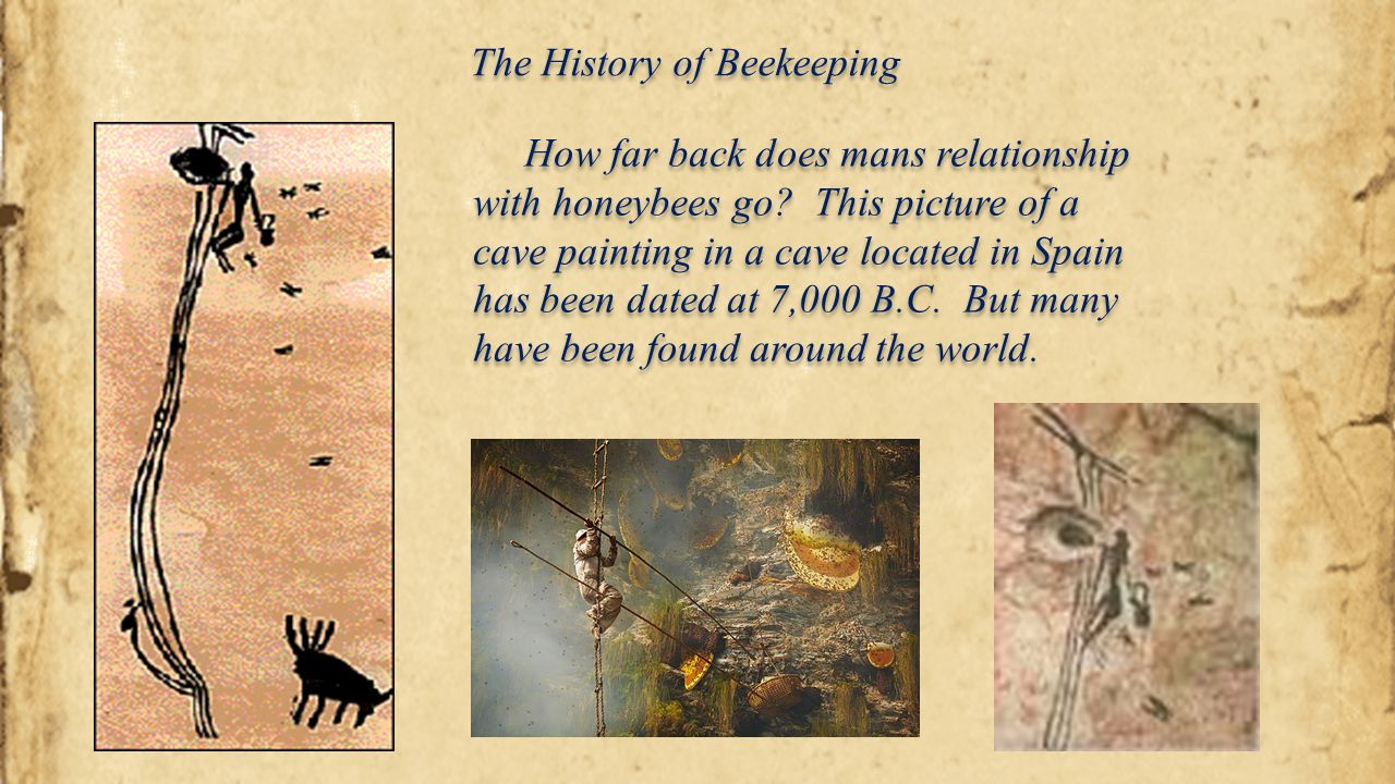 The History of Beekeeping Interesting Facts about Honey What is Surplus Honey.