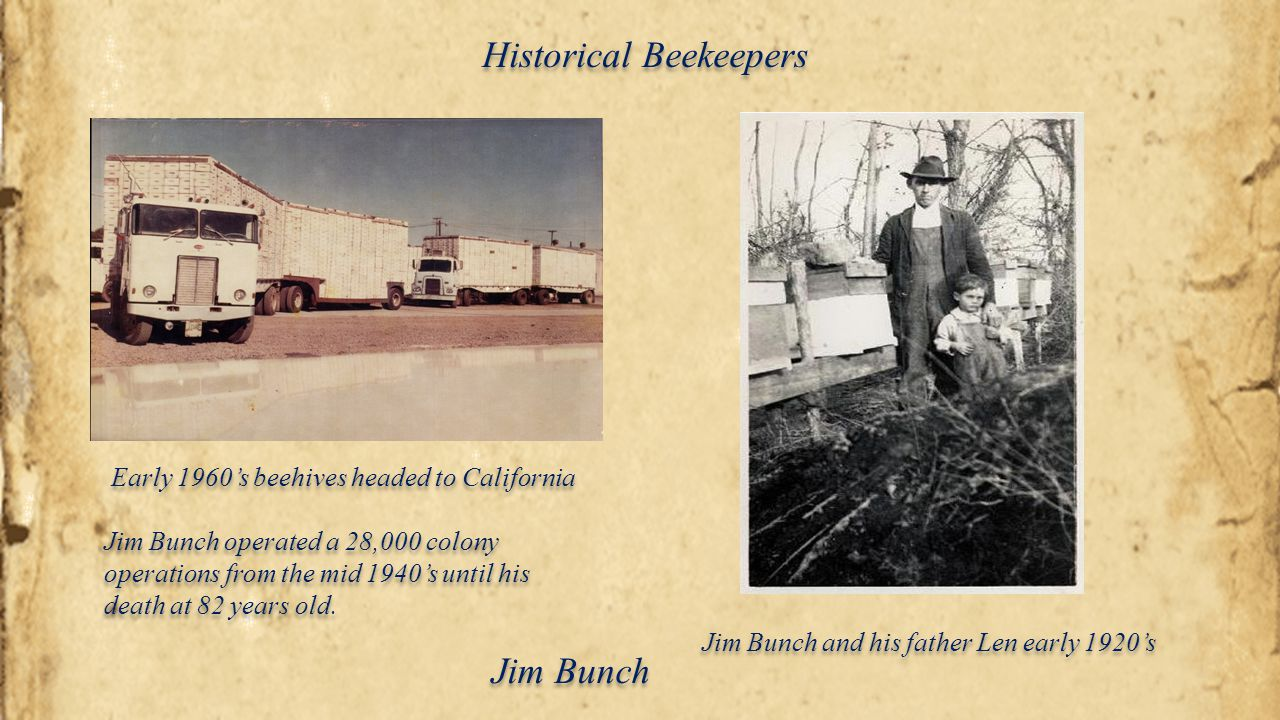 Early 1960's beehives headed to California Jim Bunch and his father Len early 1920's Jim Bunch operated a 28,000 colony operations from the mid 1940's
