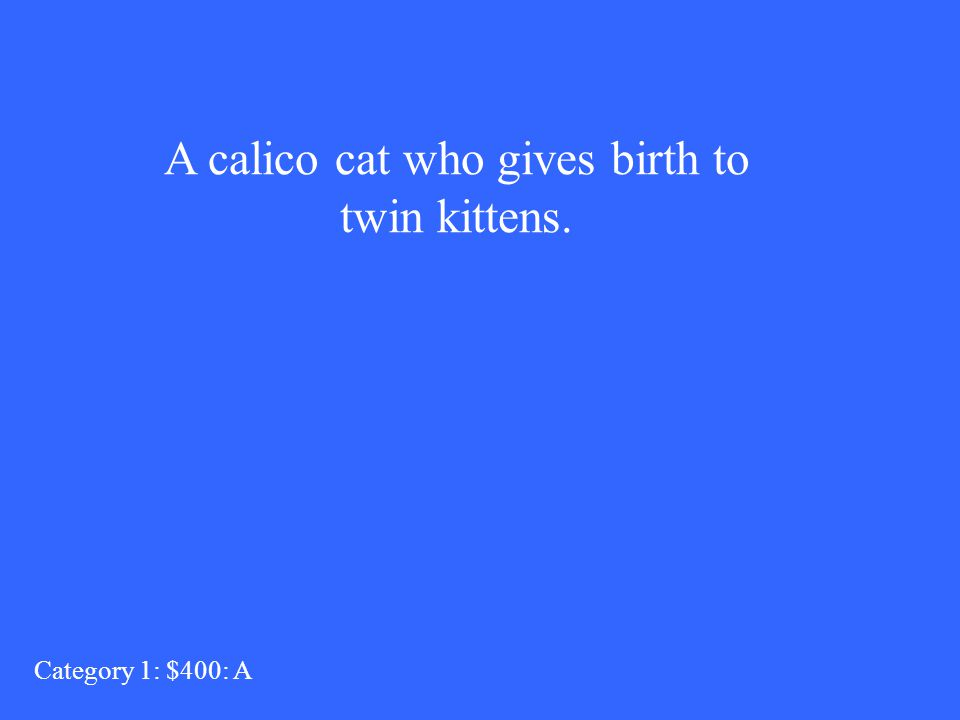 A calico cat who gives birth to twin kittens. Category 1: $400: A