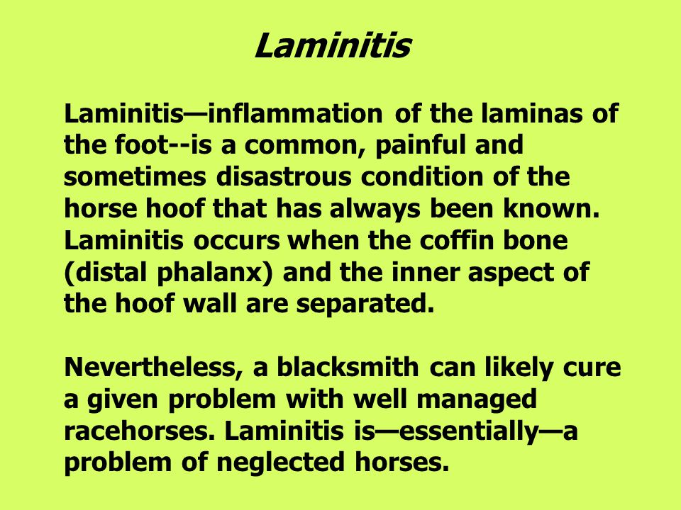 Laminitis Laminitis—inflammation of the laminas of the foot--is a common, painful and sometimes disastrous condition of the horse hoof that has always been known.