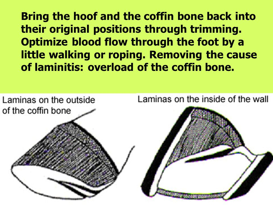Bring the hoof and the coffin bone back into their original positions through trimming.
