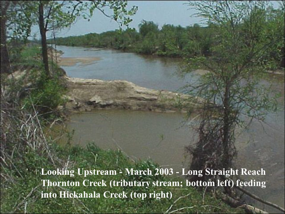 Looking Upstream - March 2003 - Long Straight Reach Thornton Creek (tributary stream; bottom left) feeding into Hickahala Creek (top right)