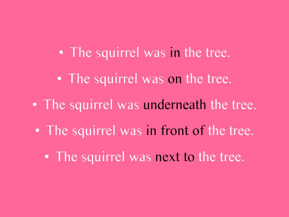 The squirrel was in the tree. The squirrel was on the tree.