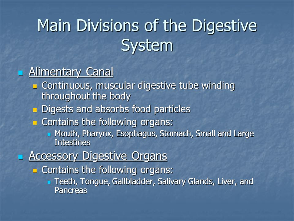 Digestive Processes in the Stomach Gastric Secretion Gastric Secretion Cephalic Phase Cephalic Phase Stimulated by the thought, sight, taste, or aroma or food Stimulated by the thought, sight, taste, or aroma or food Inputs from olfactory receptors and taste buds travel to parasympathetic enteric ganglia which then stimulate stomach glands Inputs from olfactory receptors and taste buds travel to parasympathetic enteric ganglia which then stimulate stomach glands Gastric Phase Gastric Phase Stomach distension activates stretch receptors Stomach distension activates stretch receptors Food chemicals (e.g.