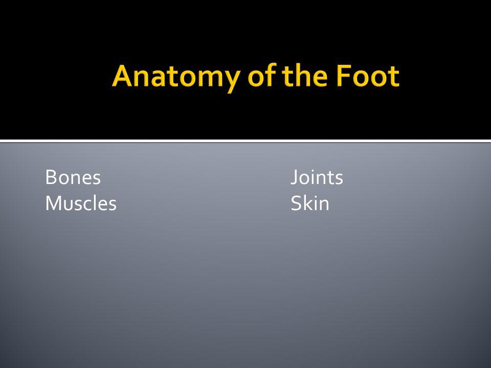 Bones Joints MusclesSkin