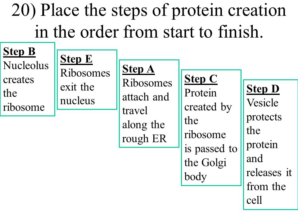 19) Which organelle produces the molecule ATP that is required by all cells?